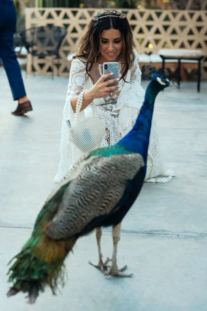 Bride taking a snap at the peacock at her wedding venue in Los Cabos  Mexico. She got married at Acre Los Cabos